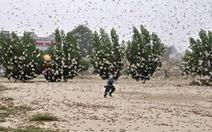 'Binh đoàn' châu chấu áp sát Trung Quốc