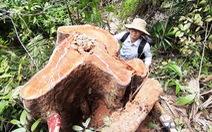 Rừng phòng hộ lưu vực thủy điện bị đốn hạ, Quảng Nam yêu cầu xử lý nghiêm