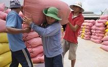 Thủ tướng yêu cầu nghiên cứu tháo gỡ khó khăn cho xuất khẩu gạo