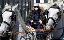 Công việc mới của những chú ngựa kéo tại thủ đô Áo