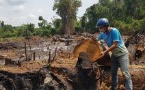 'Rừng giáp ranh Gia Lai - Đắk Lắk đang bị tàn sát': Gia Lai chỉ đạo báo cáo khẩn