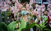 Hàng triệu cành lan tại Thái bị vứt bỏ hằng ngày vì COVID-19