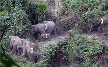 Vào mái nhà voi rừng