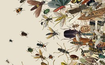 Hơn một phần tư côn trùng biến mất chỉ sau 30 năm