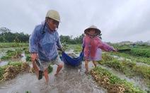 Nhiều nơi nắng hạn, Thừa Thiên Huế lại ngập vì mưa, vụ mùa bị đe dọa