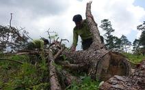 Mất 75 hecta rừng tự nhiên, nguyên giám đốc sở nông nghiệp bị khởi tố