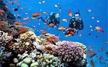 Khu bảo tồn biển Hòn Mun đón khách trở lại