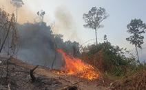 Giám đốc ban quản lý rừng thuê người đốt thực bì rẫy keo, lửa lan ra rừng