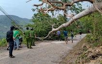 Sét đánh chết 3 phụ nữ đang trú mưa dưới gốc cây