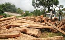 4 năm, 9.600ha rừng ở Gia Lai 'biến mất'