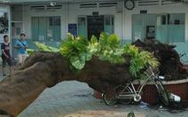 Cây xanh trong trường học: Xin ai khi cắt tỉa, đốn hạ cây?