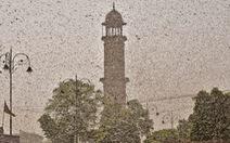 'Cơn bão châu chấu kinh hoàng' mù trời giữa ban ngày ở Ấn Độ