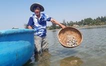 Nghêu nuôi của dân chết trắng trên sông Trường Giang