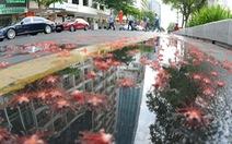 Sau cách ly, Sài Gòn vẫn còn nghỉ ngơi yên bình lạ thường