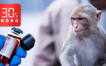 Bản tin 30s Nóng: Bé gái bị trói tay vào thùng xe tải chỉ vì nghi trộm tiền; Khỉ cướp mẫu xét nghiệm COVID-19