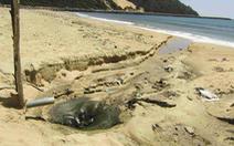 Các cơ sở sơ chế mực xà xả thải 'bức tử' biển Đề Gi