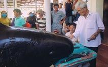 Hàng trăm người vây xem cá Ông Chuông lụy bờ ở Nha Trang