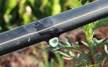 Bayer ra mắt giải pháp phòng trừ bệnh tuyến trùng, tối đa hóa năng suất cây trồng