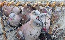Kiểm lâm Huế giải cứu hơn 20 con chim gầm ghì lưng nâu quý hiếm