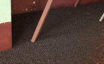 Bọ đậu đen 'tấn công' trường học, gom được cả tấn