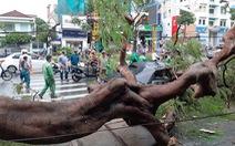 Cần Thơ: 1 người chết do mưa dông, nhiều nhà tốc mái, cây xanh bật gốc