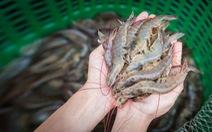 Bayer ứng dụng công nghệ mới giúp tăng năng suất ngành nuôi trồng thủy sản