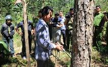Đầu độc 10ha rừng thông, 7 'lâm tặc' chia nhau 32 năm tù