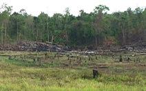 Không khởi tố vụ mất hơn 550 hecta rừng vì 'không cấu thành tội phạm'