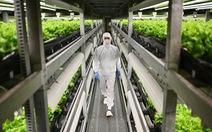 Dịch COVID-19 gây thiệt hại nặng nề cho ngành nông nghiệp ở nhiều nước