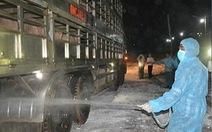 500 con heo nhập từ Thái Lan về đến Nghệ An được cách ly kiểm dịch