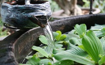 Khu vườn xanh độc đáo được làm từ vật dụng vứt ngoài đường ở Sài Gòn