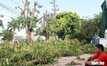 Hàng loạt cây xanh thành phố Vinh bị 'vặt trụi' trong nắng nóng 40 độ