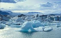 Động vật có vỏ ở Bắc Băng Dương có thể sẽ tuyệt chủng trong 80 năm tới
