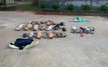 Bắt thêm 3 nghi phạm trong đường dây hạ độc chó bằng xyanua