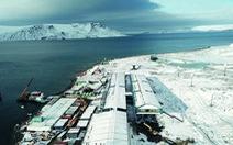 Tìm thấy hạt vi nhựa trong ruột sinh vật ở Nam Cực