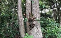 Vụ 'phá rừng dầu' ở Côn Đảo: Đất công làm du lịch,  đất rừng làm... tái định cư