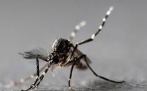 Muỗi chích có làm lây nhiễm virus corona như sốt xuất huyết?