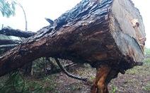 Khởi tố vụ án phá rừng trong danh thắng Langbiang