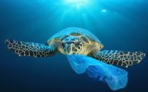 Vì sao sinh vật biển hay nuốt nhầm rác nhựa?