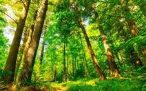 Dùng công nghệ gì để bảo vệ môi trường thế giới?