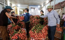Vải thiều Bắc Giang lên 40.000 - 45.000 đồng/kg, dự báo giá tiếp tục tăng