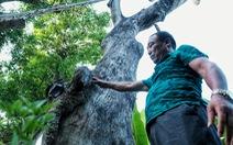 Hơn 100 cây xanh dự án đường sắt Nhổn - ga Hà Nội bị bỏ mặc, nhiều cây chết khô, mục ruỗng