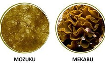 Hoạt chất Fucoidan với hệ miễn dịch