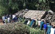 Xe khách rơi vực lúc rạng sáng 11-7, 7 người chết, nhiều người bị thương