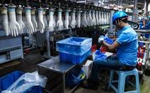 Malaysia thu hơn 5 tỷ USD từ xuất khẩu găng tay cao su