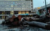 Tiếc nuối nhìn cây cổ thụ ở Cung Thiếu nhi Hà Nội bị chặt bỏ