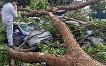 3 ôtô chạy trên phố Hà Nội bị nhánh cây xà cừ giáng xuống bất thần
