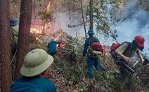 Hàng trăm người suốt đêm dập tắt rừng thông cháy