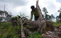 Hơn 150.000 người phá rừng làm nông nghiệp ở Tây Nguyên