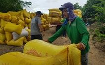 Vì sao giá gạo Việt cao hơn Thái Lan?